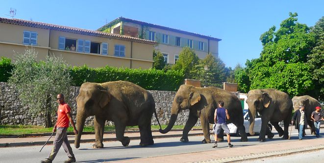 Arlette_Gruss_Invitart_Elefanten_Cabris