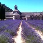 Lavendel_Abbaye de Seranque_ invitart