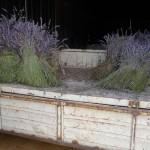 Lavendel_Hof_invitart
