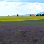 Lavendel_in _der_Provence_invitart