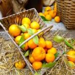 Bar_sur_Loup_Orangen_invitart