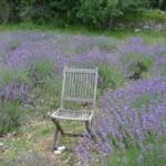 Gourdon_lavender_invitart